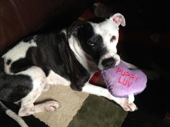 07 Tisen Brings me Puppy Love