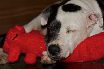 18 Tisen Napping with Red Dog