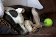 06 Sleepy Tisen