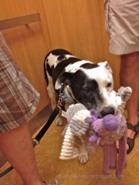 11 Tisen with new toy plus purple cow
