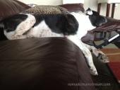 07 Tisen making himself comfortable
