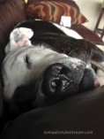Tisen sleeping on couch