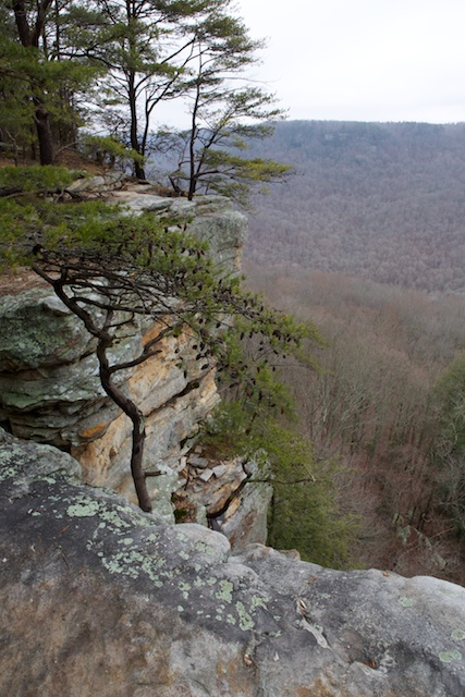 I sometimes get a little closer to the edge than I'm really comfortable with--unlike the trees, I am afraid of heights
