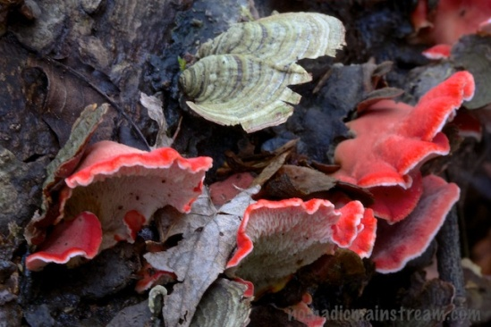 Final look at the more colorful fungus we saw