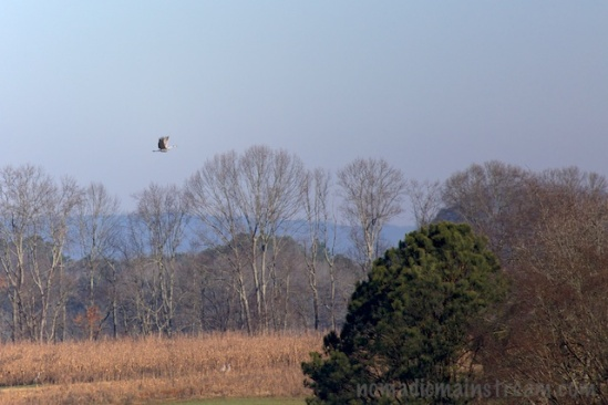 Single crane over the lake