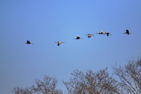 Same flock, regrouping