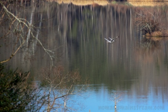 Flying in front of reflected trees