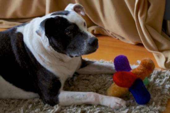 Tisen contentedly plays with his old friend, Jack, while I shoot Purple Monkey