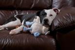 Lamb, so often lost, looks so cozy in Tisen's arms