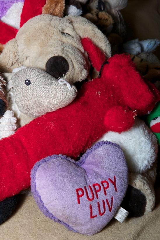 Close up of Big Dog, Red Dog, Artie (the Armadillo/'Possum), and Puppy Luv cuddling