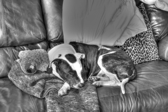 Tisen cuddling Mr. Beaver quite a few months back (B&W HDR processed)