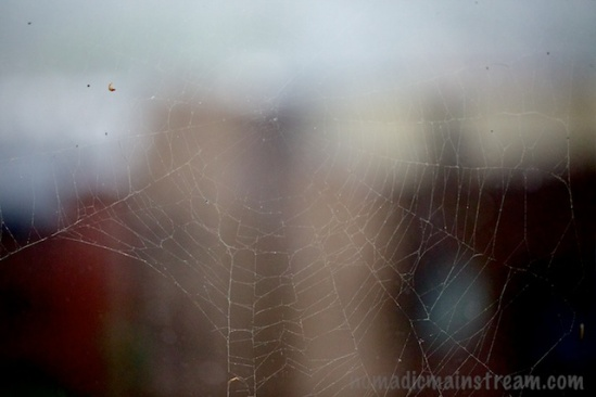 Spider web with buildings blurred in the background