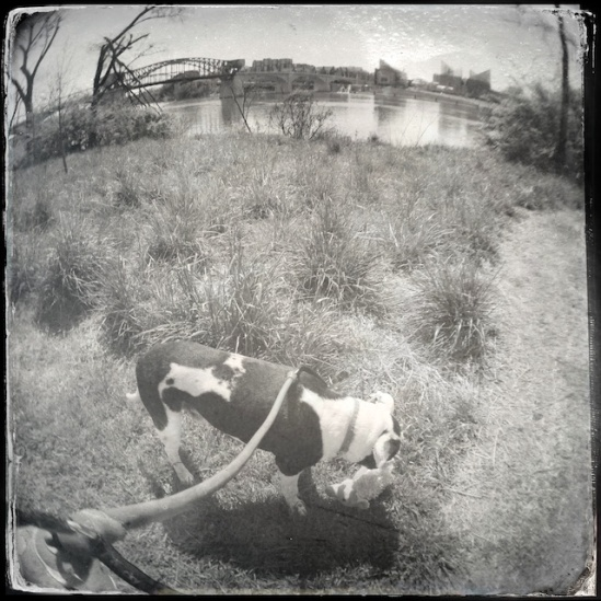 Multiplying the effects--Hipstamatic Tintype with Fisheye lens attachment!