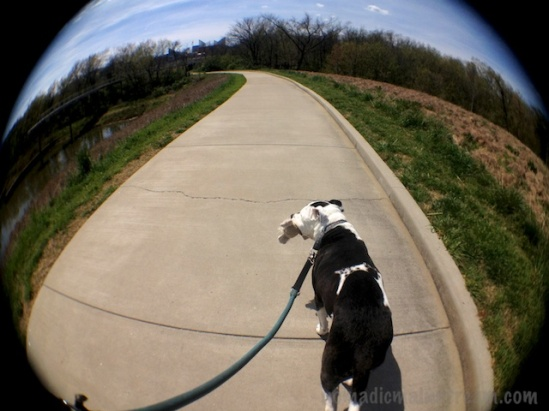 Fisheye Tisen using Camera! app on iPhone