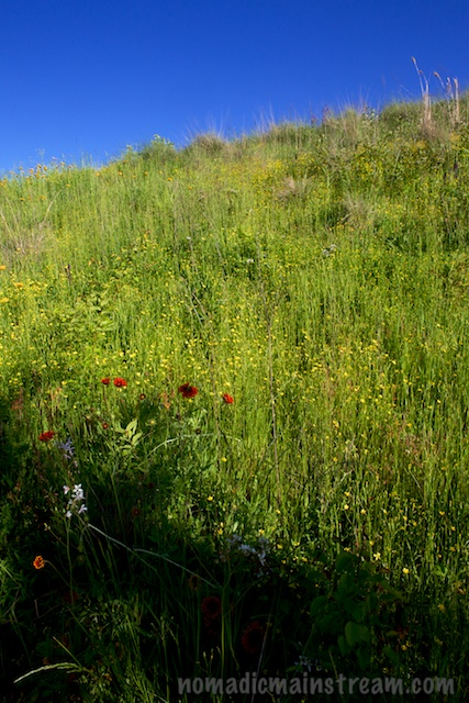 A mixture of bright flowers and native grasses rises up to a deep blue sky
