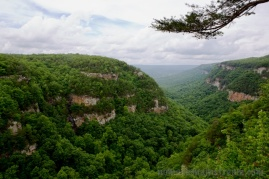 My favorite view from the easily accessible overlooks at Cloudland Canyon