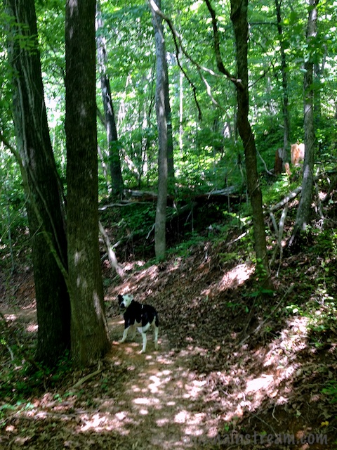 Tisen is a great trail dog--always checking to make sure Mommy is coming if he gets too far ahead