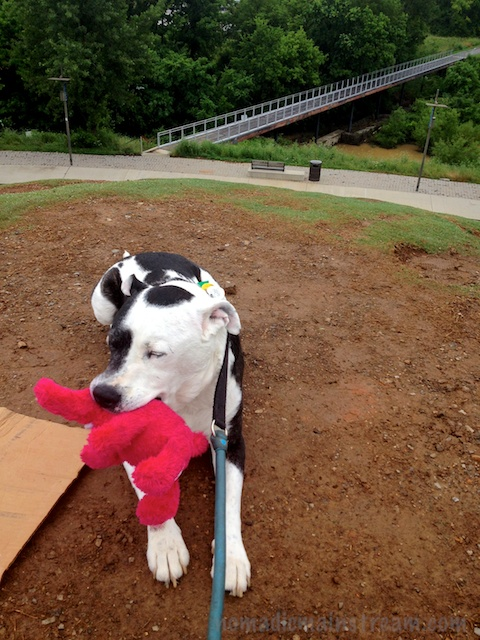 Tisen posing on the top of the sledding hill with the bridge over the wetland in the background
