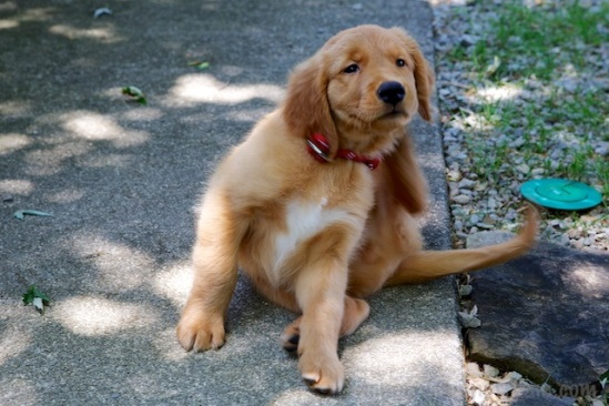 Even scratching is cute when a puppy does it