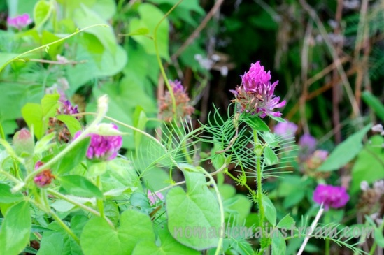 Some bright purple blooms pop up out of the undergrowth