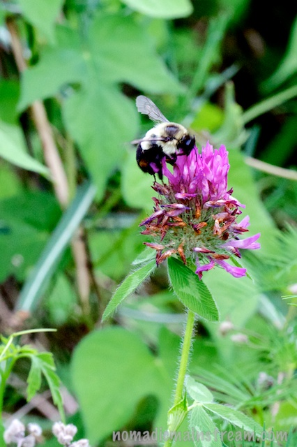 The bee escapes Tisen and lands on a flower