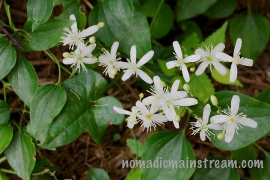 Neighboring flowers