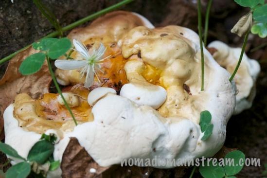 Melting mushroom