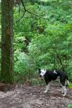 My happy, happy trail dog