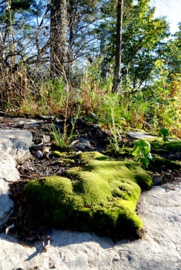 Gren moss thriving on a rock at an overlook