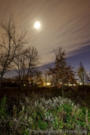 The moon on a windy night as clouds moved in; off-camera flash used to light the foreground plants