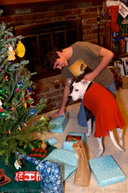"Super Dog to the rescue when help was ""needed"" passing gifts"