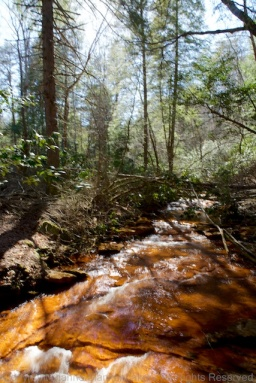 A creek in the woods on the way to Fall Creek Falls